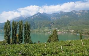 Weinbau am Kalterer See in Südtirol