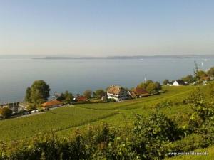 Blick über die Weinreben auf den Bodensee
