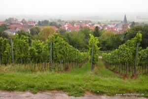 Weinberg in der Pfalz