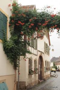 Blumenumranktes Haus in Forst