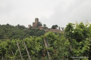Die Burg Wachenheim thront über den Weinreben