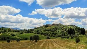 Weinberg in de Toskana