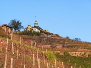 Weinregion Sachsen