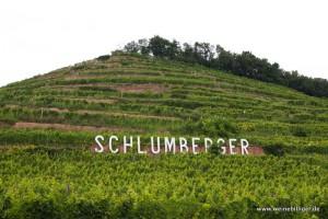 Weinberg der Domaines Schlumberger