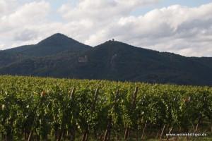 Vor allem Riesling und Weißburgunder werden im Elsass angebaut