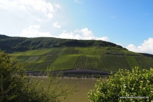 Weinhänge am Mittelrhein