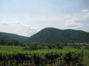 Weinregion Wachau in Österreich