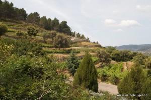Weinterassen auf Mallorca
