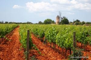 Weinanbau bei Binissalem