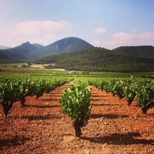 Weinanbaugebiet Yecla in Spanien
