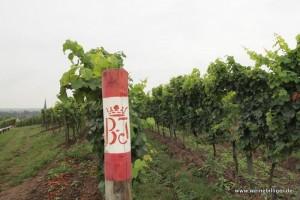 Weinlage Kalkofen in Deidesheim