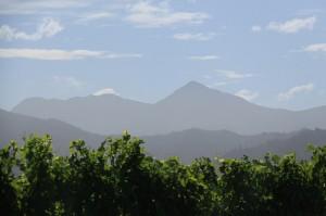 Wein in Neuseeland