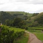 Weinlage am Kaiserstuhl