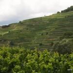 Weinterassen am Kaiserstuhl