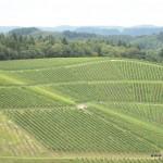 Weinhang von Schloss Staufenberg