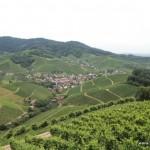 Blick über die Weinhänge