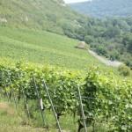 Weinlage Saalhäuser