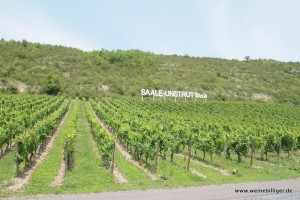 Saale Unstrut Wein Schriftzug