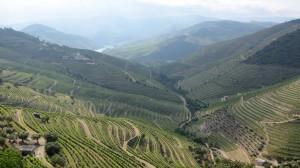 Weinberge im Dourotal