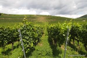 Weinlage bei Oberrotweil