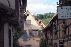 Blick von der Altstadt auf die Weinberge von Riquewihr