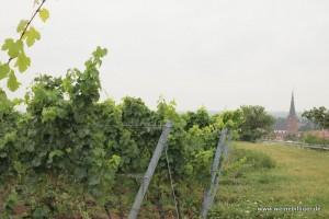 Zahlreiche Weinberge umgeben Deidesheim