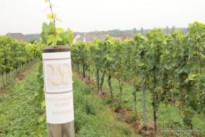 Weinlage Jesuitengarten