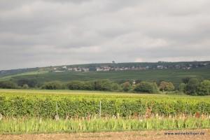 Weinlage bei Hohen-Sülzen