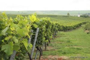 Weinlandschaft bei Westhofen