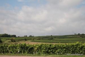 Weinlage in Rheinhessen
