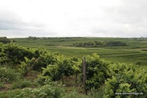 Weinlage bei Bechtheim