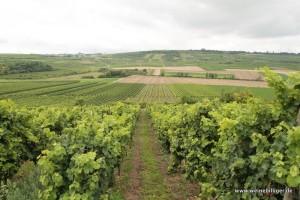Weinlagen bei Bechtolsheim