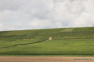 Weinlage bei Saulheim