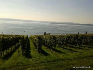 Weinhänge direkt am Bodensee