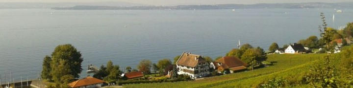 Herrlicher Blick über Weinreben auf den Bodensee