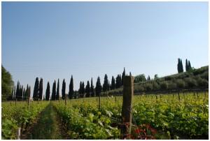 Wein aus Valpolicella