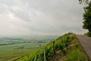 Weinhänge in Iphofen in Franken
