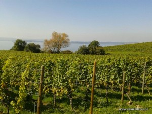 Weinhang am Bodensee