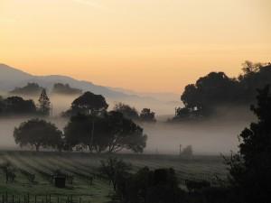 Nebel über dem Napa Valley (Foto:  seligmanwiate / cc)