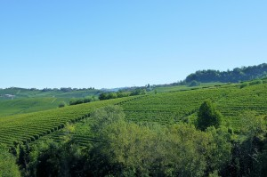 Weinberg im Piemont