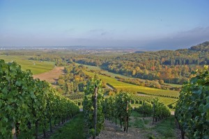 Besonders in Württemberg wird Trollinger angebaut