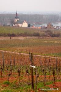 Blick vom Roten Hang auf  Nierstein und den Rhein